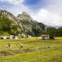 Pascoli Alpini